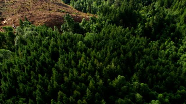 vídeos de stock e filmes b-roll de iniciar a operação em oregon, filmagem aérea floresta - montanha costeira