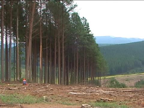 logging / tree felling with chainsaw w/audio - 枝 植物部分 個影片檔及 b 捲影像
