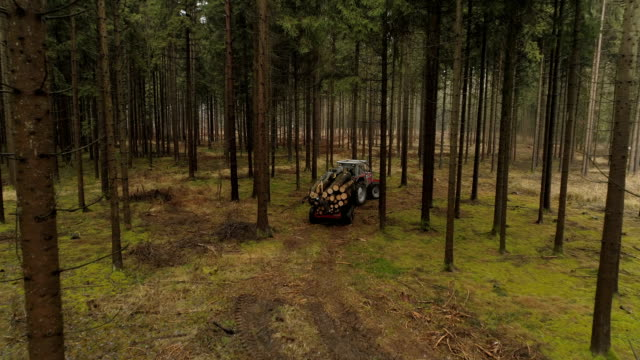 CLOSE UP Logging truck loaded with tree trunks driving from the woods to sawmill video