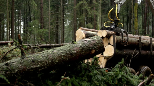CLOSE UP: Logging truck working in the spruce forest collecting the harvest video