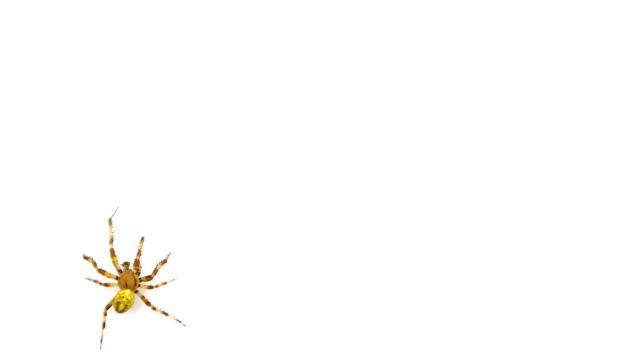 logotyp spindel kryper på skärmen isolerad på en vit bakgrund - spindel arachnid bildbanksvideor och videomaterial från bakom kulisserna