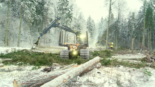 Logs scattered on the ground on the forest Logs scattered on the ground on the forest with the log grappler truck gettings logs construction equipment stock videos & royalty-free footage