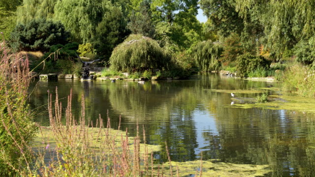 London Regent es Park Queen Mary es Garden – Video