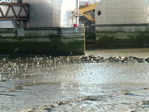 London: Thames River Barrier Flood Control, Pull from Sea Birds video