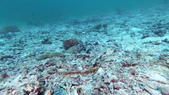 sualtı ağartılmış mercan resifinde yalnız balık - ölü stok videoları ve detay görüntü çekimi
