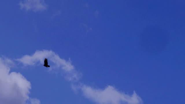 A lone male bald eagle soars above in a bright blue cloudy sky Shot on Red Weapon Digital Cinema Camera. 100fps eagle bird stock videos & royalty-free footage