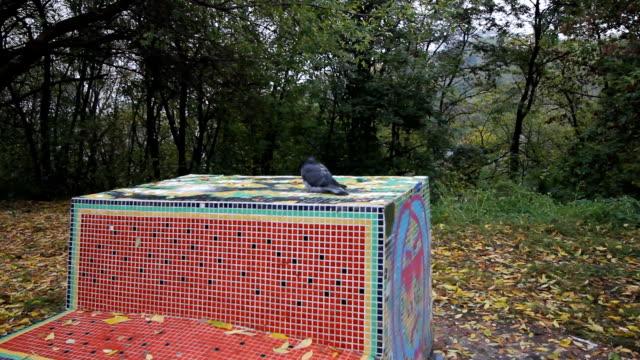 vidéos et rushes de pigeon solitaire avec plumes ébouriffées assis sur le mur de couleur au cours de l'automne froid ou une journée d'hiver. - sky