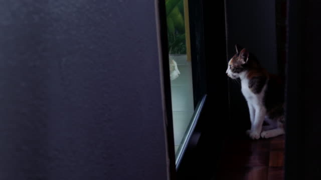 Lonely Cat Looking Out From door video