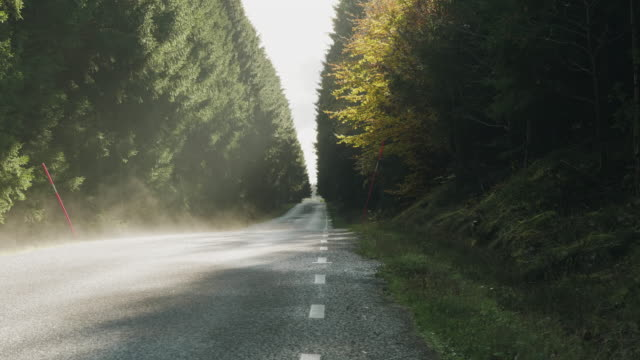 en ensam landsväg i en pinjeskog - pine forest sweden bildbanksvideor och videomaterial från bakom kulisserna