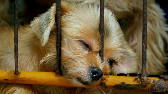 einsamen hund im käfig - käfig stock-videos und b-roll-filmmaterial