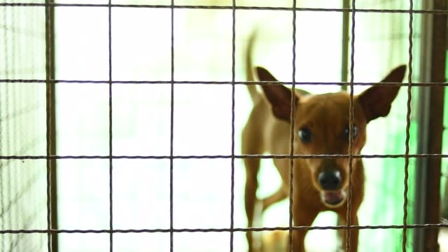 lonely dog in cage lonely dog in cage homeless shelter stock videos & royalty-free footage