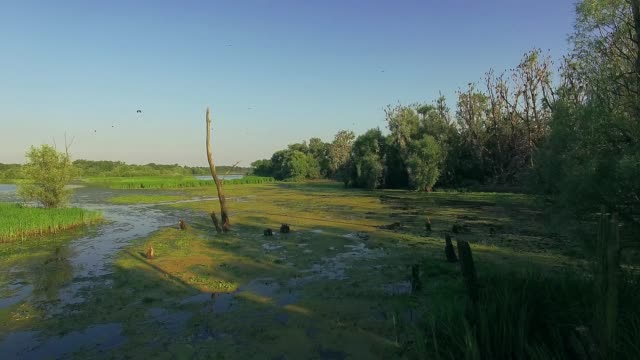 lonely dry tree in the overgrown pond 4k aerial view of dry tree in the overgrown pond, Overgrown landscape of swamp water trees bushes, dead tree in the lake in summer, aerial view of overgrown pond 4K, Flying over the river green trees duckweed stock videos & royalty-free footage