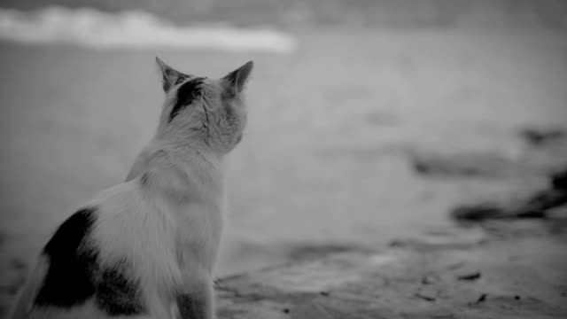 Lonely hungry cat. Adopt an animal, don't buy it! video
