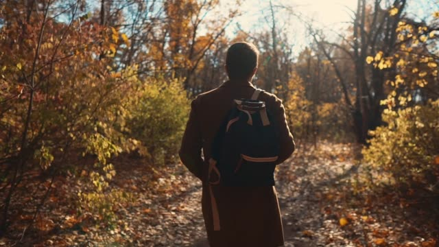 vídeos de stock e filmes b-roll de lonely man is strolling in woodland in sunny day in autumn, back view - man admires forest
