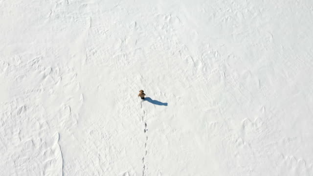 Lonely man walking in the snowy arctic desert. View from above. Loneliness and overcoming