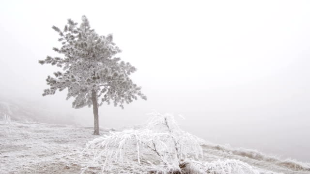 Lonely mountain pine on the snow-covered mountainside video
