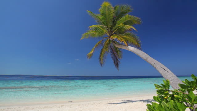 einsam palmtree am strand - sound wave stock-videos und b-roll-filmmaterial