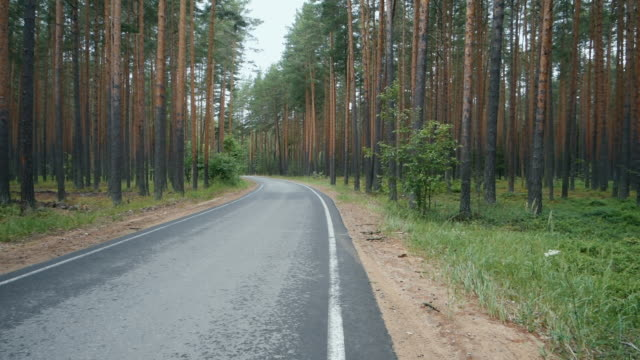 A lonely road in a pine tree forest.