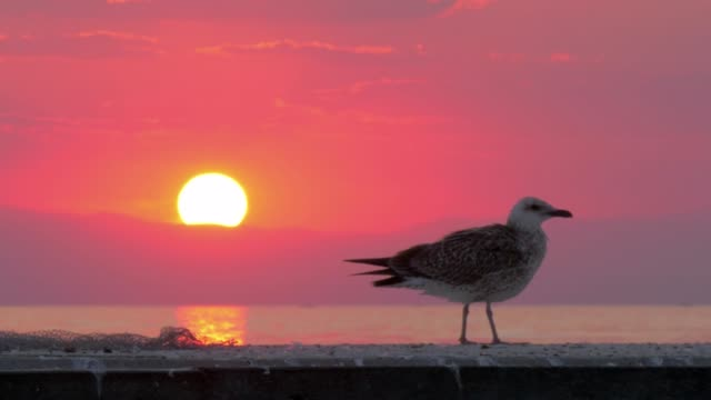 Lonely seagull near the sea at sunset