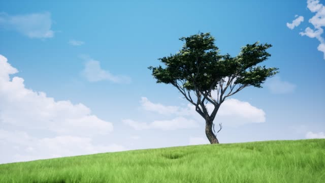 lonely tree i fält realistiska bilder. sommar landskap, äng landskap animation. blå himmel med flödande moln rörelse. grönt gräs och svajande trädgrenar i vinden, breeze 4k video - single pampas grass bildbanksvideor och videomaterial från bakom kulisserna