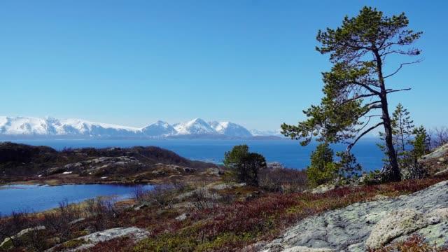 lonely tree in the Lofoten Islands