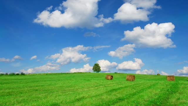 ensamt träd på fältet med höbalar - single pampas grass bildbanksvideor och videomaterial från bakom kulisserna