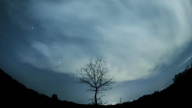 星空の下の孤独な木 - 広角撮影点の映像素材/bロール