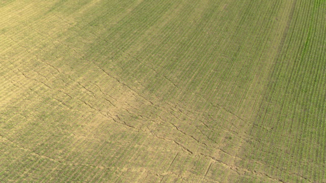 vídeos de stock, filmes e b-roll de drone: longas rachaduras atravessam o grande campo de milho no campo árido. - erodido