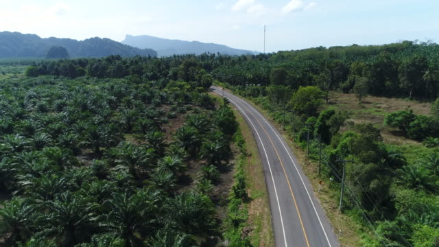 4K Long curved road In the coconut tree garden, photo by drone on top view. video