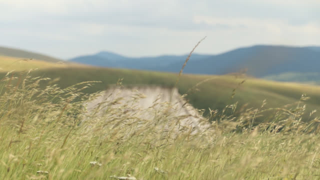 Long grass on wind in front of lonely house in the middle of the hill
