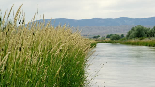 Long Grasses and Reeds Sway Gently in the Breeze as Water Flows Down the Cody Canal in Cody, Wyoming under a Partly Cloudy Sky Long Grasses and Reeds Sway Gently in the Breeze as Water Flows Down the Cody Canal in Cody, Wyoming under a Partly Cloudy Sky aqueduct stock videos & royalty-free footage