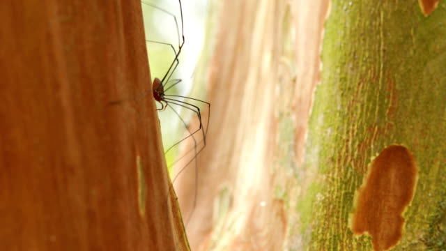 Long Leg Spider Profile video