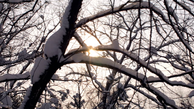 long panorama of winter forest in sunset, snow is lying on branches of trees, sun is shining, flecks of sunlight - albero spoglio video stock e b–roll