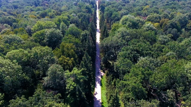 stockvideo's en b-roll-footage met lange traject uitgevoerd in midden van enorme national park en behoud heiligdom - duurzaam toerisme