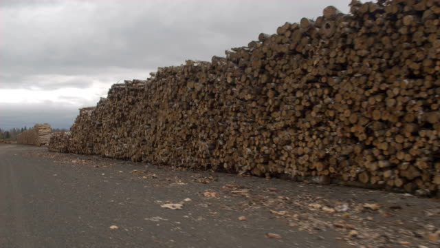 AERIAL: Long row of stacked firewood logs at the edge of a mixed forest in USA video