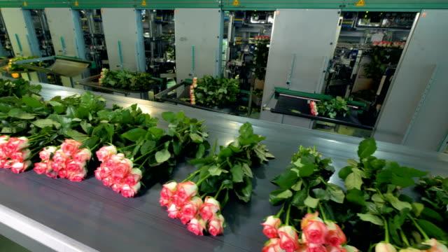 long stems of freshly cut roses on a conveyor line. - stelo video stock e b–roll