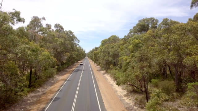long straight road through forest - lungo video stock e b–roll