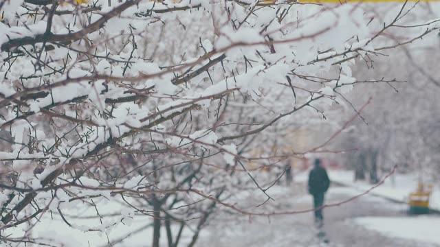 vídeos y material grabado en eventos de stock de ramas de árboles largos con nieve blanca derretida contra el parque - nieve amontonada