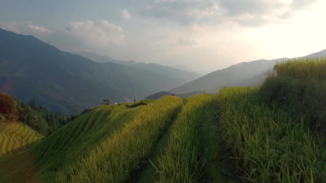 longji rice terrace in ping an village - aerial agriculture stock videos & royalty-free footage