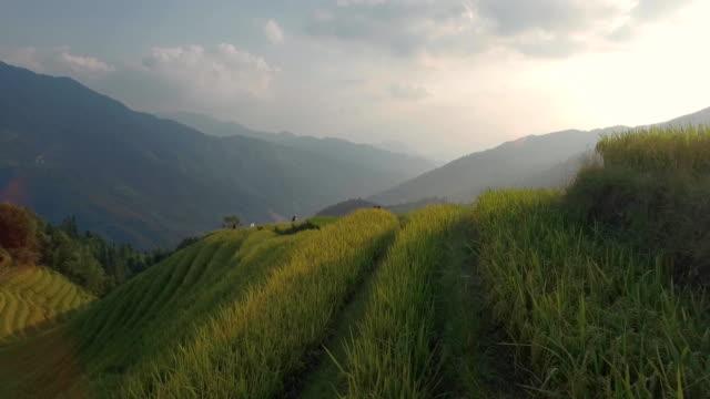 longji rice terrace in ping an village - pole ryżowe filmów i materiałów b-roll