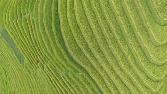 Longji Rice Terrace Top View video