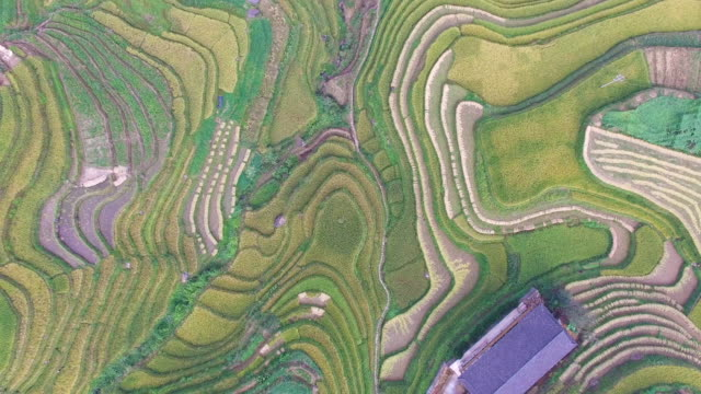 Longji Terraced Fields in Longsheng,Guilin,China video