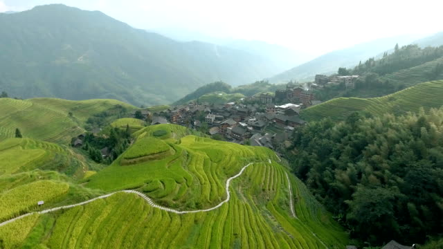 Longsheng Village and Terraced Rice Field Beautiful FullHD aerial shot of Longsheng Village and Terraced Rice Field at Morning - Longsheng, Guangxi province, China. Rural view, agriculture, scenic area.Top view of small wooden traditional houses. sa pa stock videos & royalty-free footage