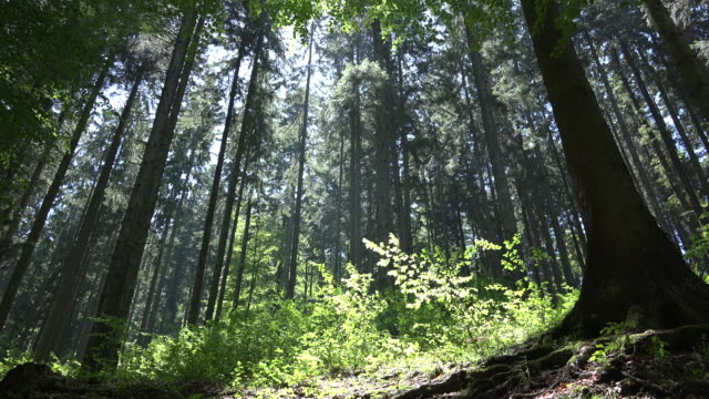 Look up to the top of the forest with high trees