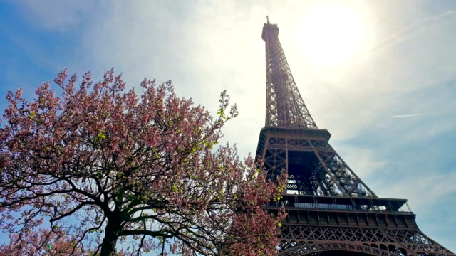Looking At Eiffel Tower In Paris in Spring with Cherry tree blossom, cinematic steadicam shot