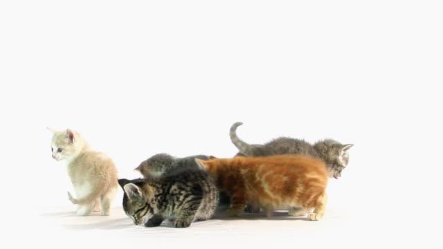 stockvideo's en b-roll-footage met looking cats - kitten