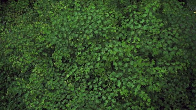 vídeos de stock e filmes b-roll de looking down at green leaves in the woods. - oscilar