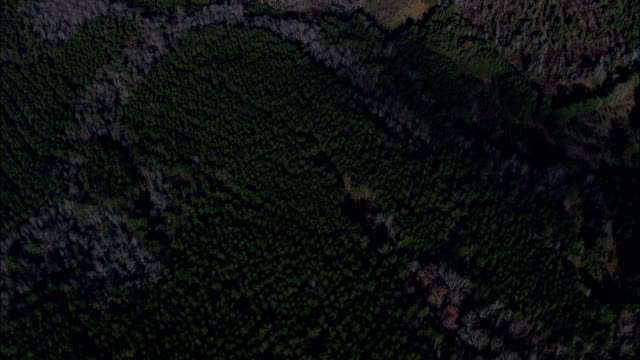 looking down on landscape of woods - Aerial View - South Carolina,  Chester County,  United States