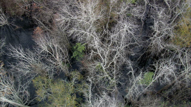 Looking Down through Trees To Swamp  - Aerial View - Georgia,  Wayne County,  United States video