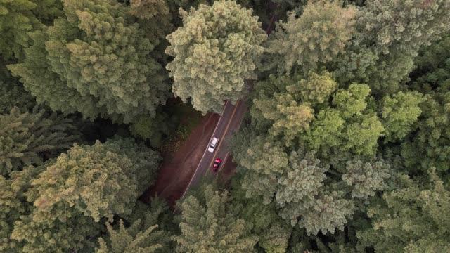 blick hinunter zu autos, die im wald von sequoias in nordkalifornien, usa westküste fahren - staatspark stock-videos und b-roll-filmmaterial